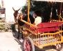 Ich mit Eselkutsche auf Mallorca